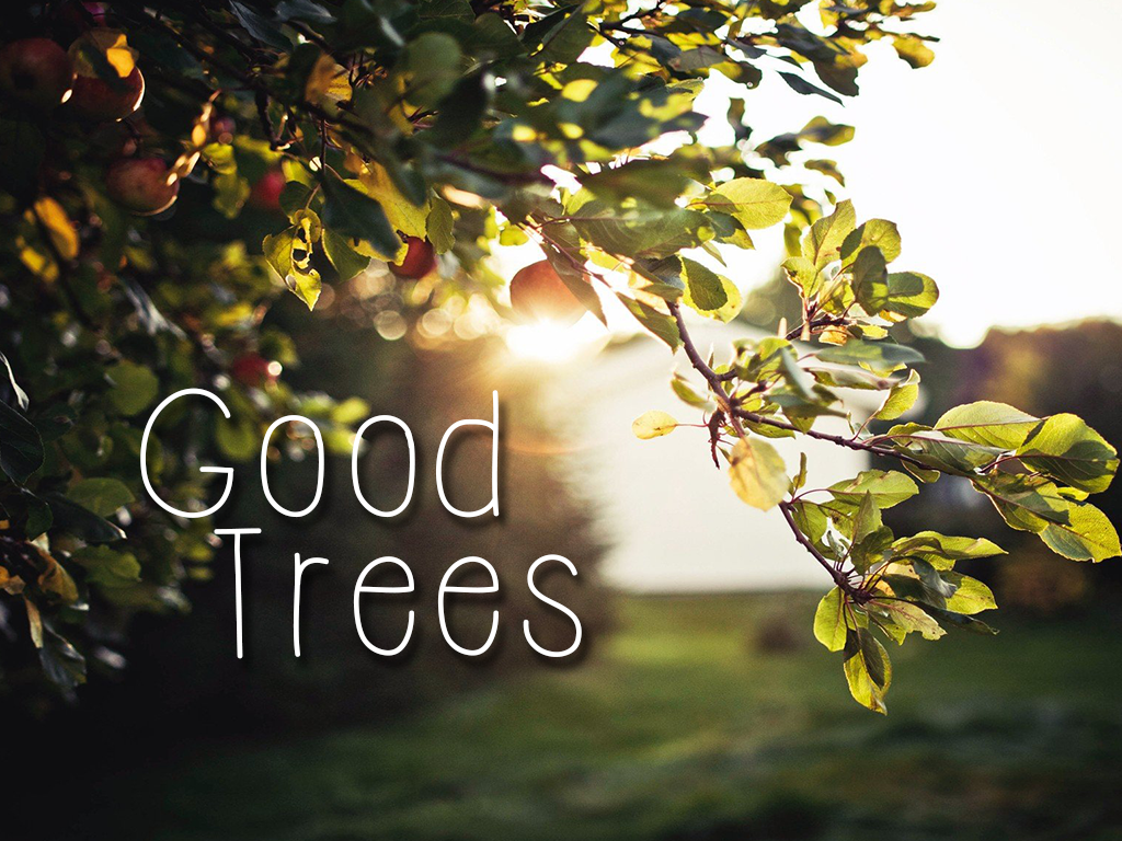 Good Trees Archives