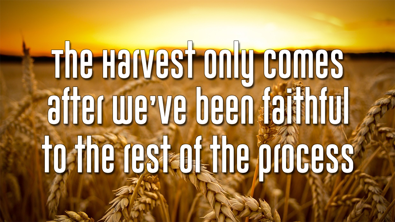 The Harvest Only Comes…