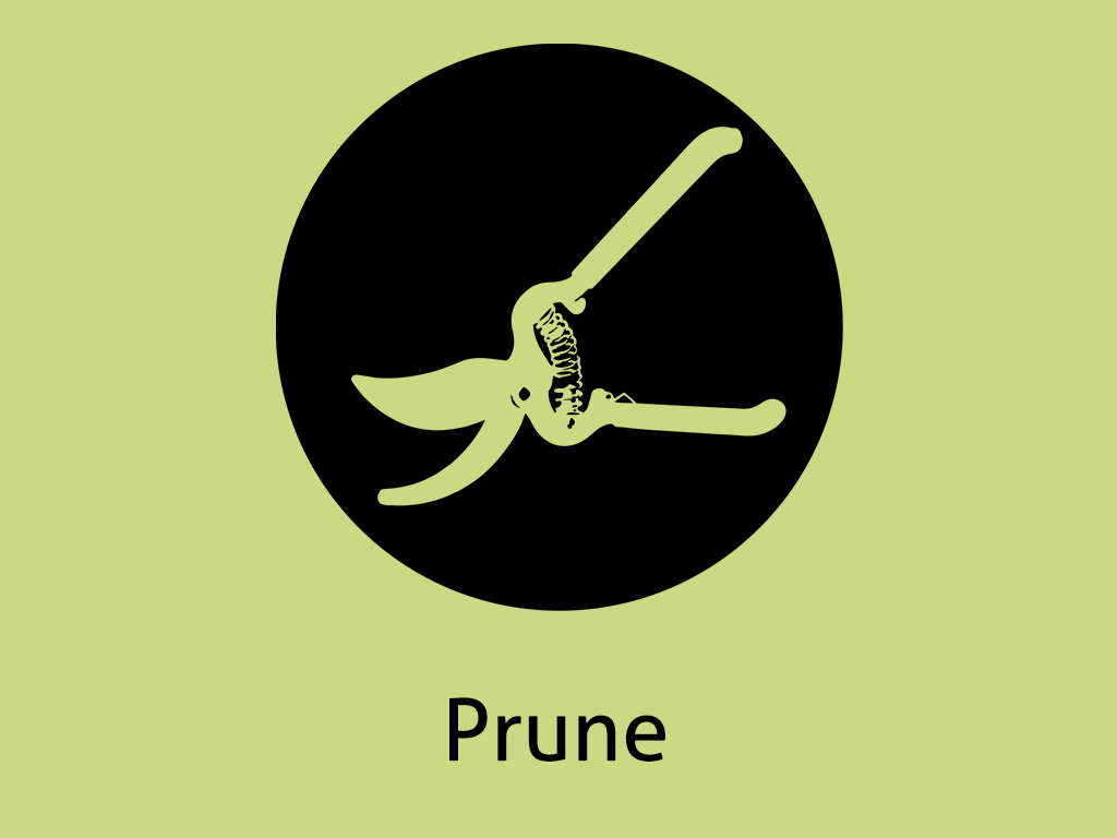 Daily Coaching Tip, Thursday, June 16, 2016 (Prune)